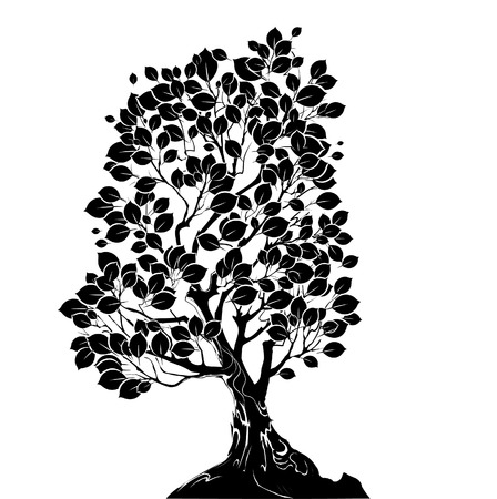 deciduous: silhouette art drawn deciduous tree on a white background