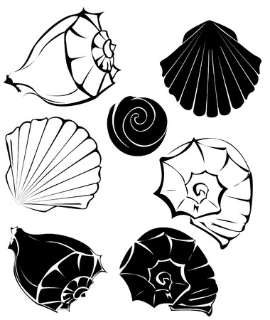 artistically: artistically painted, stylized seashells on a white background