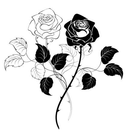 rosas negras: dos rosas artísticamente dibujados sobre un fondo blanco