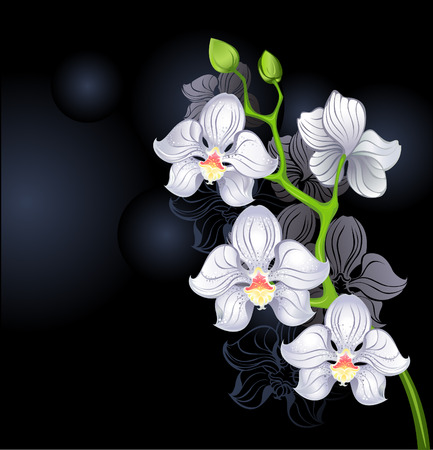 white orchids: artistically painted white orchid on a black background.