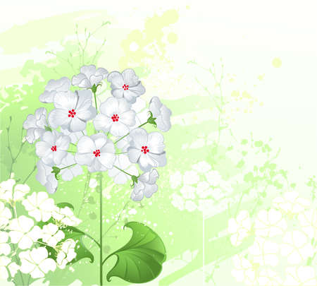 artistically: artistically painted, white flowers with wild green plants.  Illustration