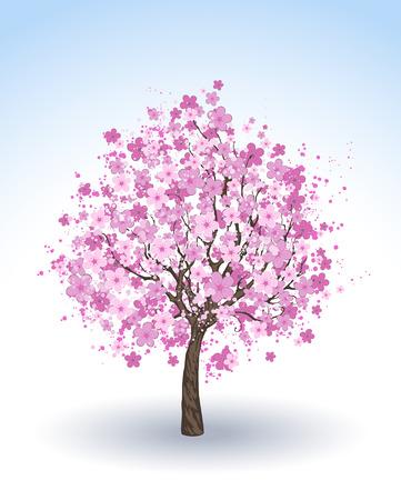 fleur cerisier: artistiquement peint fleurs de cerisier rose sur un fond blanc.