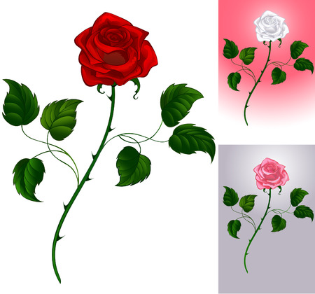 artistically: Three options artistically painted roses: red on white background, pink to gray, white to pink.  Illustration