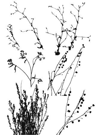 herbarium: black silhouettes of wild plants on a white background.