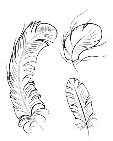 artistic drawn, contour, original three feathers on a white background.