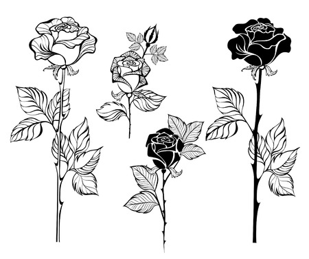 set of painted art, contour roses on a white background 일러스트