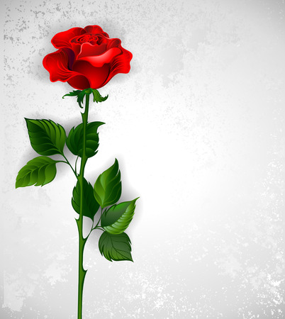 red rose with a straight stem and green leaves on a light background. Illustration