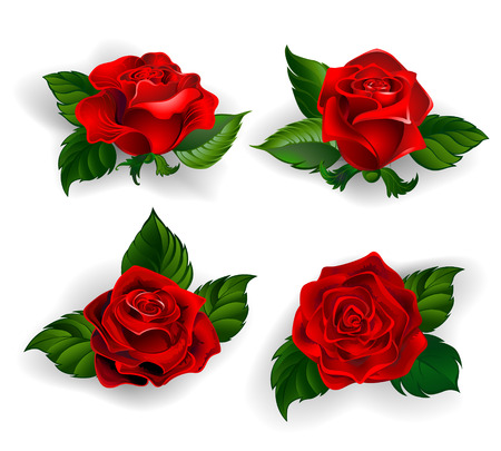 set of red roses with green leaves on a white background. Ilustrace