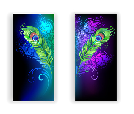 peacock feathers: dos pancartas con coloridas plumas de pavo real sobre un fondo negro.
