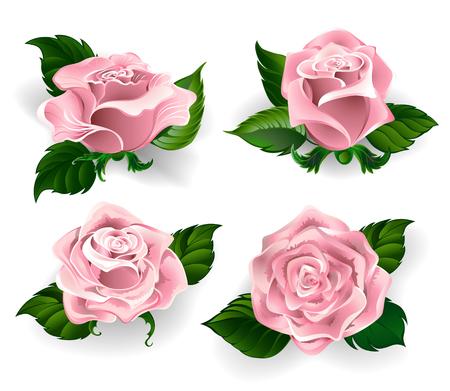 Set von gemalten Rosen Rosenquarz Farbe, mit grünen Blättern auf einem weißen Hintergrund Vektorgrafik
