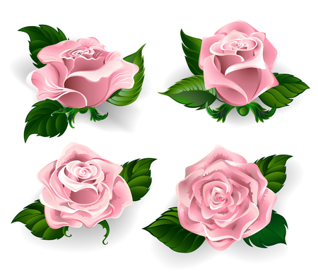 Set of painted roses rose quartz color, with green leaves on a white background Illustration