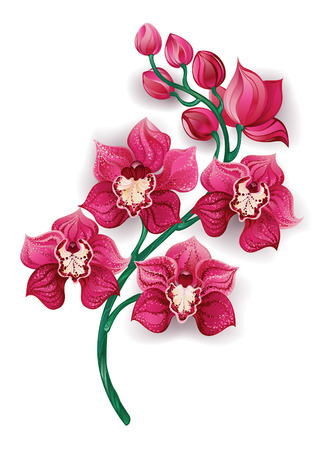 branch, artistically painted a bright pink orchids on a white background. Design with orchids. Vettoriali