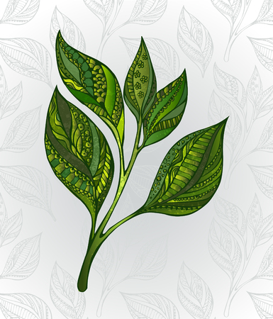 green leaves: Green tea sprout, decorated with an abstract pattern on a gray background, decorated with stylized leaves. Tea design. Hand drawn. Sketch drawing Illustration