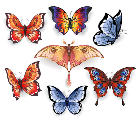 exotic butterflies: set of isolated bright, realistic exotic butterflies on a white background. Exotic butterflies.
