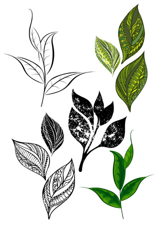 shoots: Set of patterned, silhouette, green and black tea leaves and shoots. Design elements. Templates. Tea design. Hand drawn. Sketch drawing
