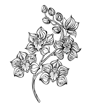 artistically painted, contour, black orchid on a white background. Design with orchids. Tattoo style. Dotwork.