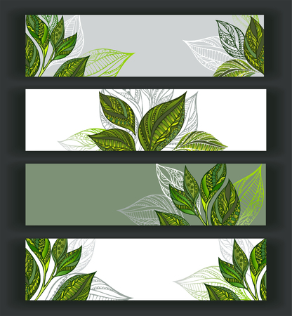 ceylon: Set of horizontal banners decorated with patterned sprouts and leaves of tea. Tea design. Illustration