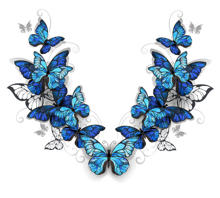 swarm: Symmetrical pattern of blue, realistic morfid butterflies on a white background. Design with butterflies. Morpho. Design with blue butterflies morpho.