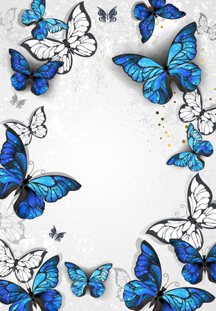 morpho: Frame with blue realistic morpho butterflies on gray textural background. Design with butterflies. Morpho. Design with blue butterflies morpho.