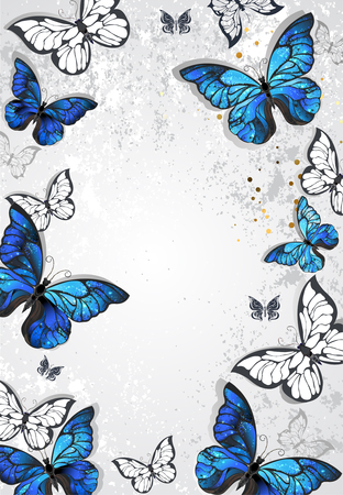 textural: Frame with blue realistic morpho butterflies on gray textural background. Design with butterflies. Morpho. Design with blue butterflies morpho.