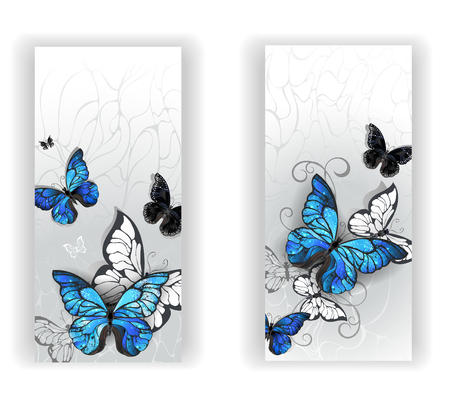 textural: Two banners with blue butterflies morpho and black butterflies on gray textural background. Morpho. Design with blue butterflies morpho.