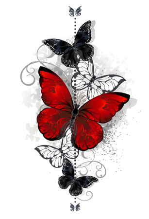 The composition of a bright red and black butterfly butterflies on a white background. Tattoo style. Morpho. Vectores