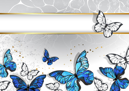 morpho: Designed with a narrow, rectangular banner with a gold frame and blue, realistic  butterflies morpho on a light gray background. Design with blue butterflies morpho.
