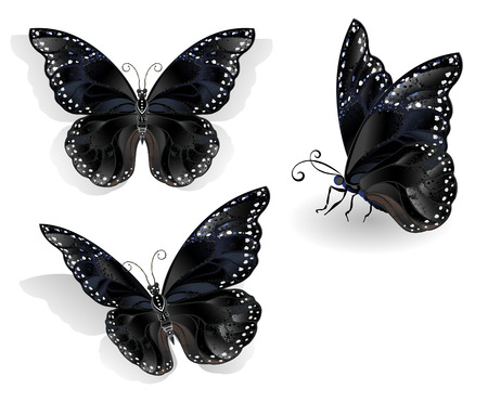 morpho: Set of realistic, isolated, black butterflies morpho on a white background. Design with butterflies.