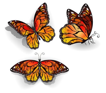 Set of orange, realistic, isolated monarch butterflies on a white background. Monarch. Design with butterflies. Illustration