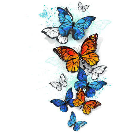paint drop: Flying, bright, blue butterfly morpho and orange monarch butterfly on a white background. Morpho. Monarch butterfly. Design with butterflies. Illustration