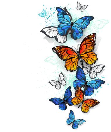 Volar, brillante, morpho azul y mariposa monarca naranja sobre un fondo blanco. Morpho. Mariposa monarca. Diseño con las mariposas.