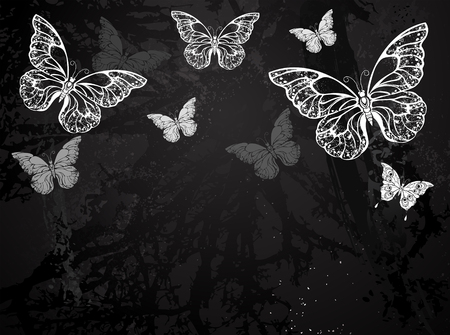 morpho: Butterflies painted white chalk on black chalkboard. Design with butterflies. Drawing with chalk. Butterfly morpho.