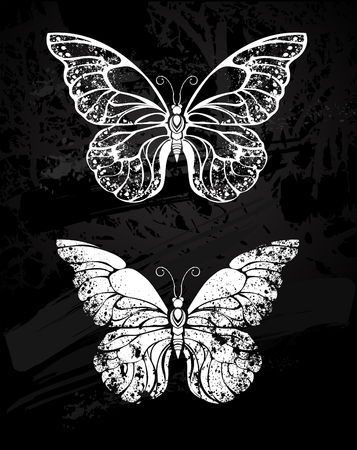 morpho: Painted white chalk on black chalkboard  silhouette butterfly morfida. Design with butterflies. Drawing with chalk. Butterfly morpho.
