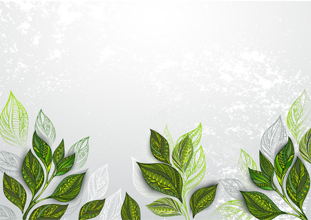 Gray, textured background with green tea leaves. Tea design.