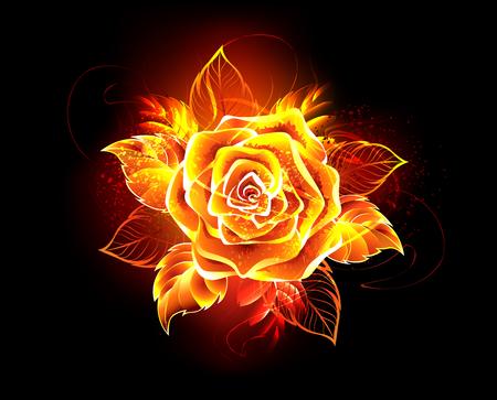 Blühende Rose von Feuer und Flamme auf schwarzem Hintergrund.