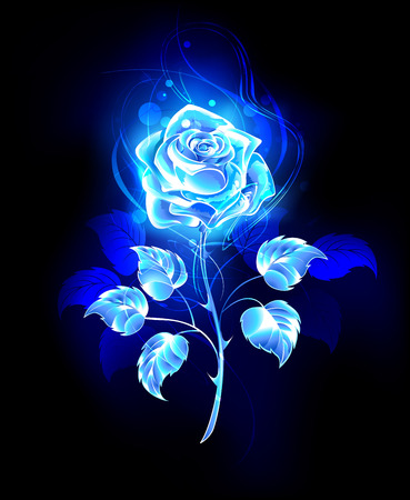 Blooming, abstract rose from blue flame on black background.
