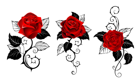 Three artistically painted red roses with black spiny stems and black leaves on white background. Tattoo style.