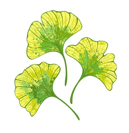 Set of artistic autumn ginko biloba leaves painted green and yellow on white background.