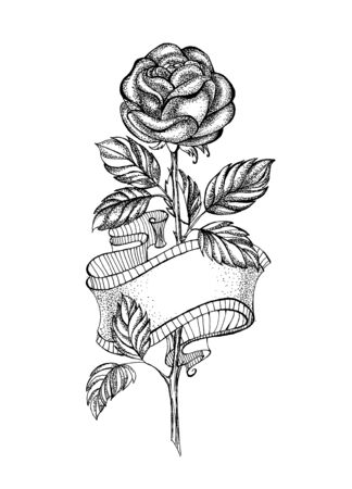 Sloppy, pencil drawing of straight rose with flexible ribbon on white background.