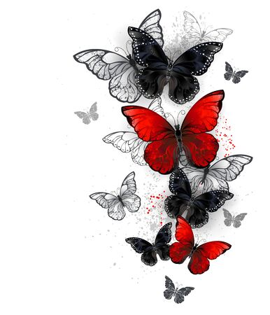 Flock of flying, realistic, red and black morpho butterflies on white background with drops of paint. Vector.