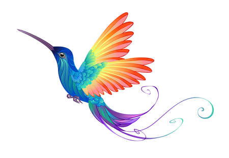 Beautiful rainbow bird hummingbird on a white transparent background.