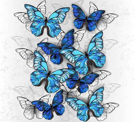 Vertical composition of realistic, blue and white morpho butterflies on gray textured background. Morpho.