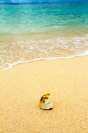 sea shells on tropical sand turquoise caribbean summer vacation travel icon photo