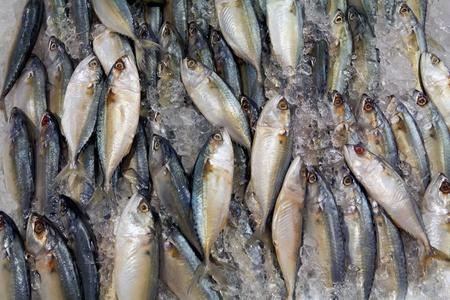 variëteit aan verse vis schaal-en schelpdieren in de markt close-up achtergrond