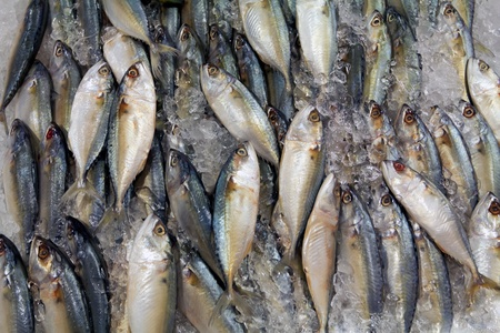 variety of fresh fish seafood in market closeup background photo