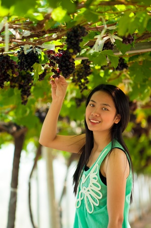 Beautiful Asia woman is harvesting grape in vinery photo
