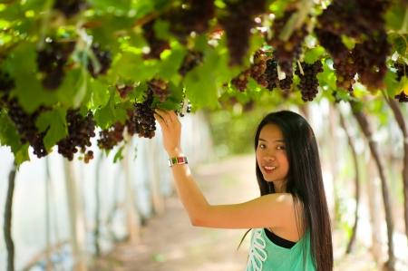 Mooie Azië vrouw plukken druiven in wijngaard. Stockfoto