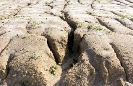 desertification: Soil erosion to overgrazing leading to desertification caused by over exploitation Stock Photo