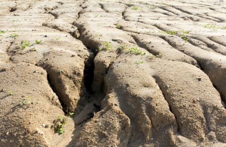 Soil erosion to overgrazing leading to desertification caused by over exploitation photo
