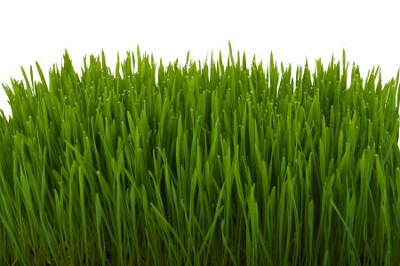 Close-up van verse dik gras met water druppels in de vroege ochtend